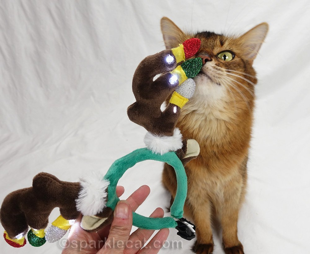 somali cat checking out reindeer headband