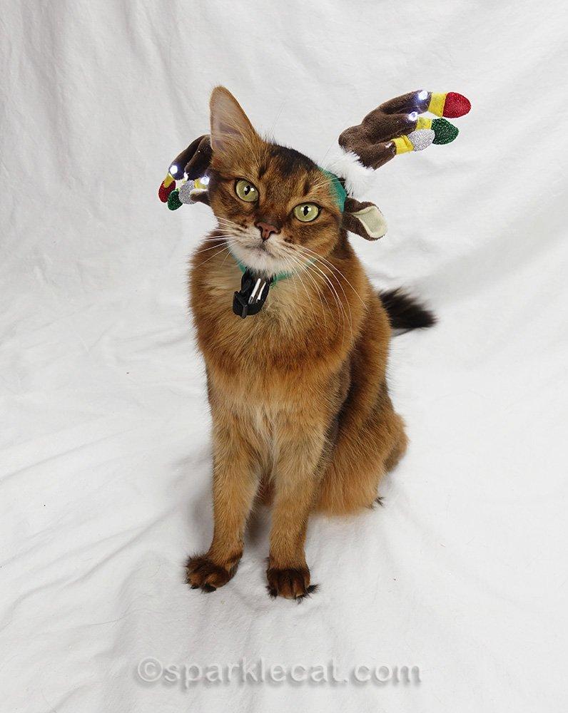 somali cat with reindeer headband on crooked