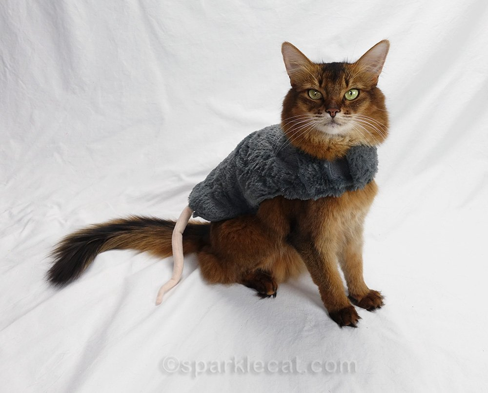 somali cat side view of bottom half of outfit