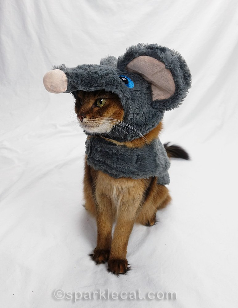 somali cat wearing mouse costume