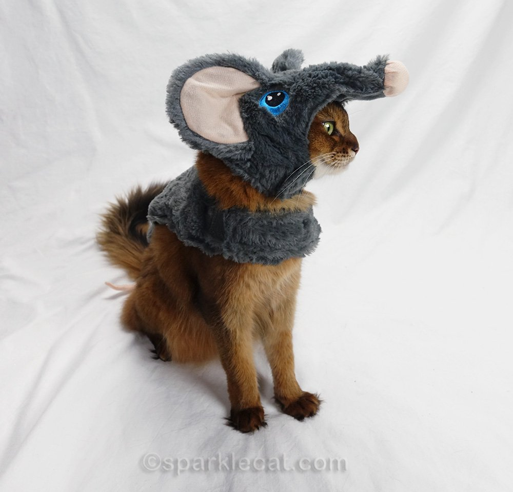 side view of somali cat in mouse costume