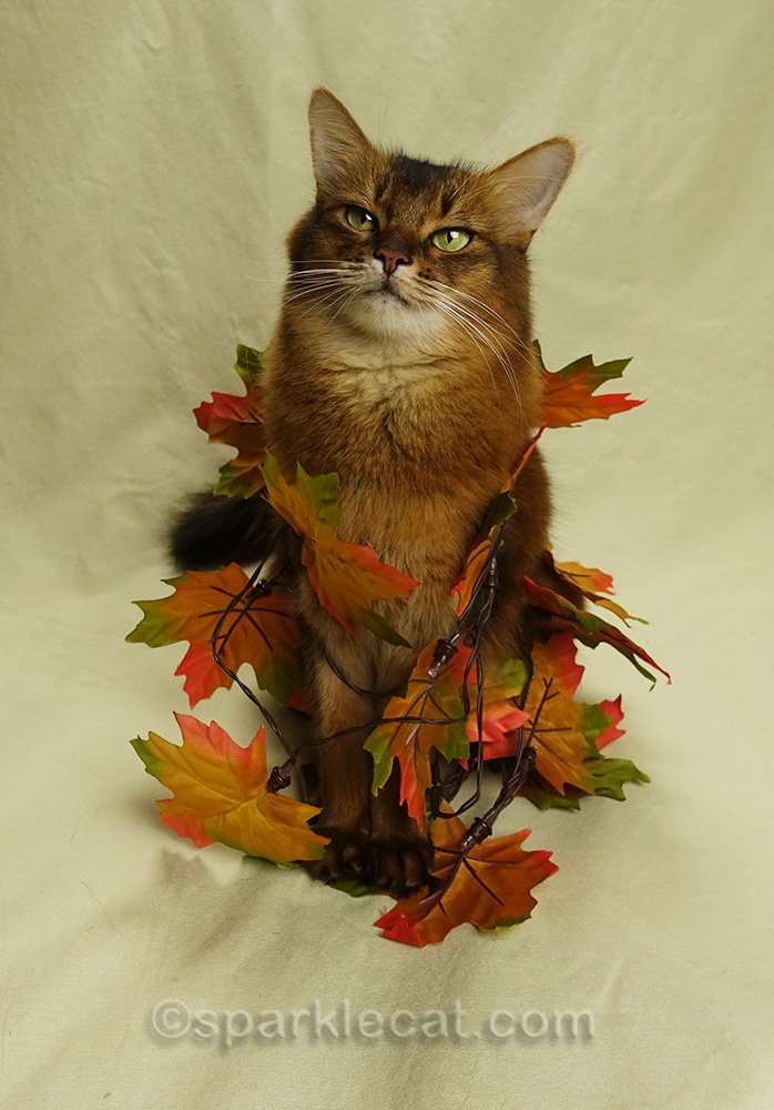 a kitty gratitude list for thanksgiving