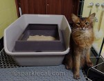 Litter Box Stealth for the Holidays – Tips and Tricks from petMD