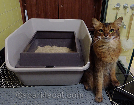 somali cat litter box litter box tips & Litter Box Stealth for the Holidays - Tips and Tricks from petMD ... Aboutintivar.Com