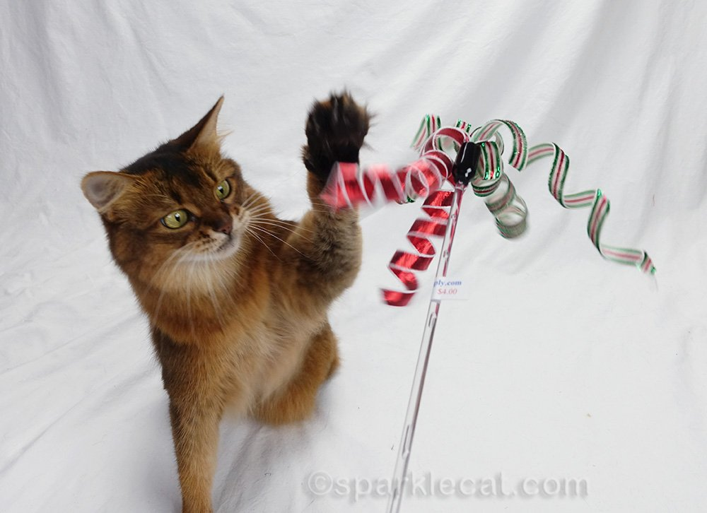 somali cat playing with Christmas cat toy