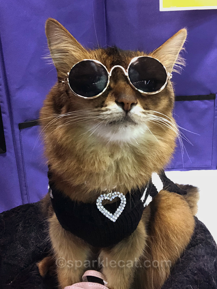somali cat selfie with crooked sunglasses