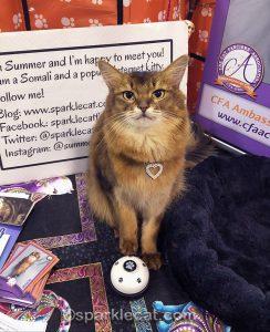 Ambassador Cat Debut