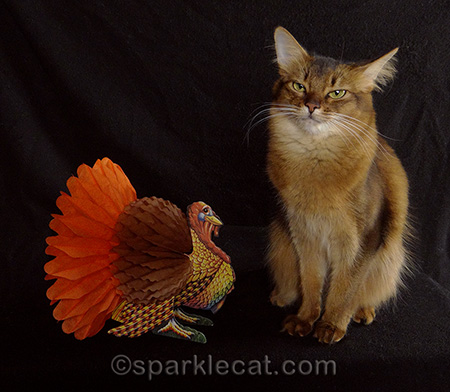 mad somali cat, turkey decoration, cat thanksgiving, cat photography, cat holiday photography