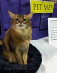 Fun Time at the Cat Show