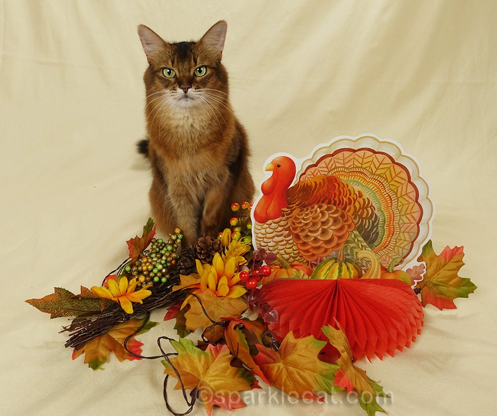 Summer shares her human's Thanksgiving gratitude list... all about Summer, of course!