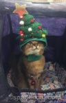 Catmas Tree Hat Selfie
