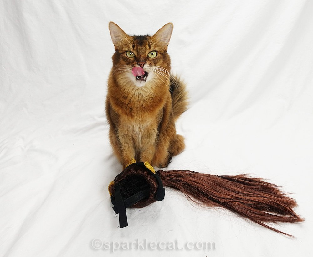 somali cat with rejected diva wig