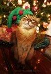 somali cat in elf hat
