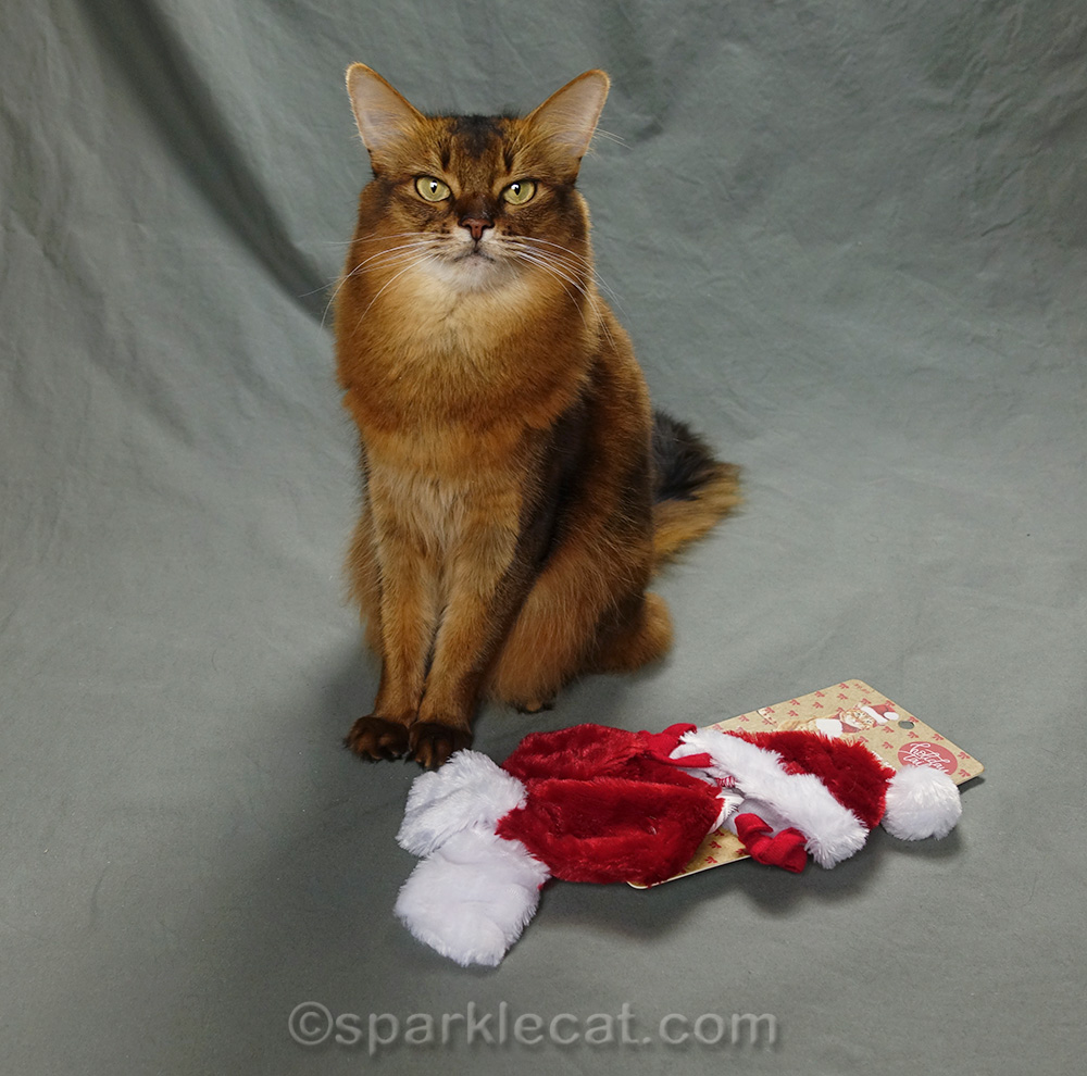 somali cat with new Santa hat and scarf