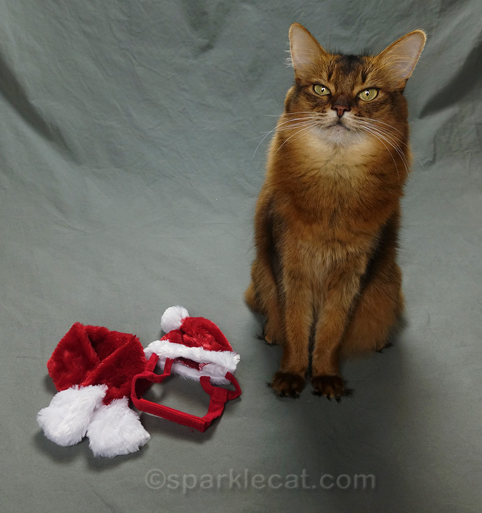 somali cat with santa hat and scarf