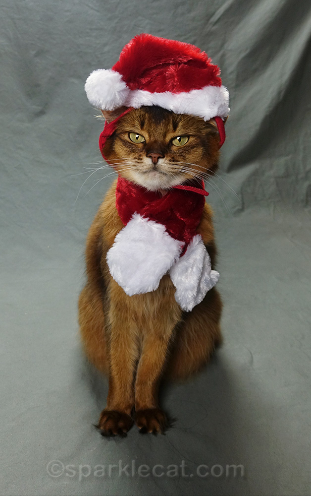 somali cat wearing santa hat and scarf, badly