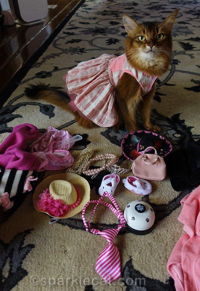 somali cat with wardrobe