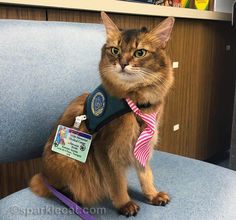 therapy cat at work