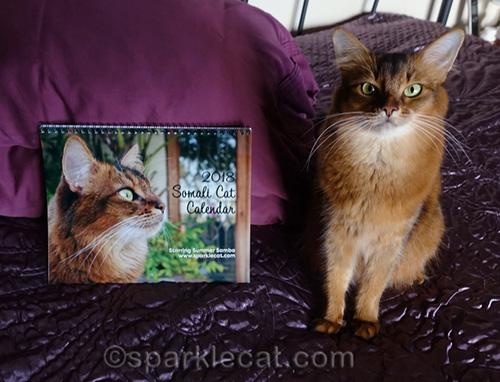 somali cat with her calendar