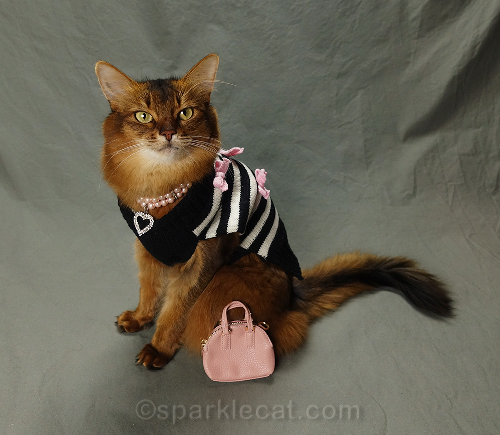 somali cat in hipster kitty outfit