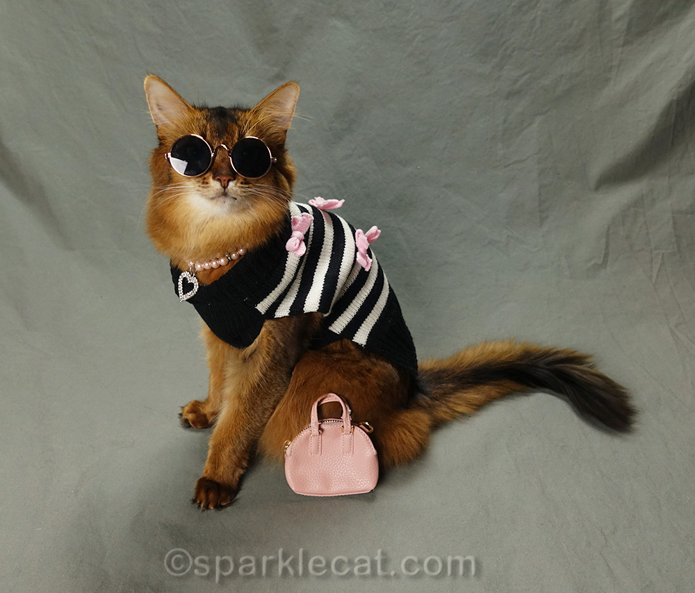 somali cat in hipster kitty outfit with sunglasses