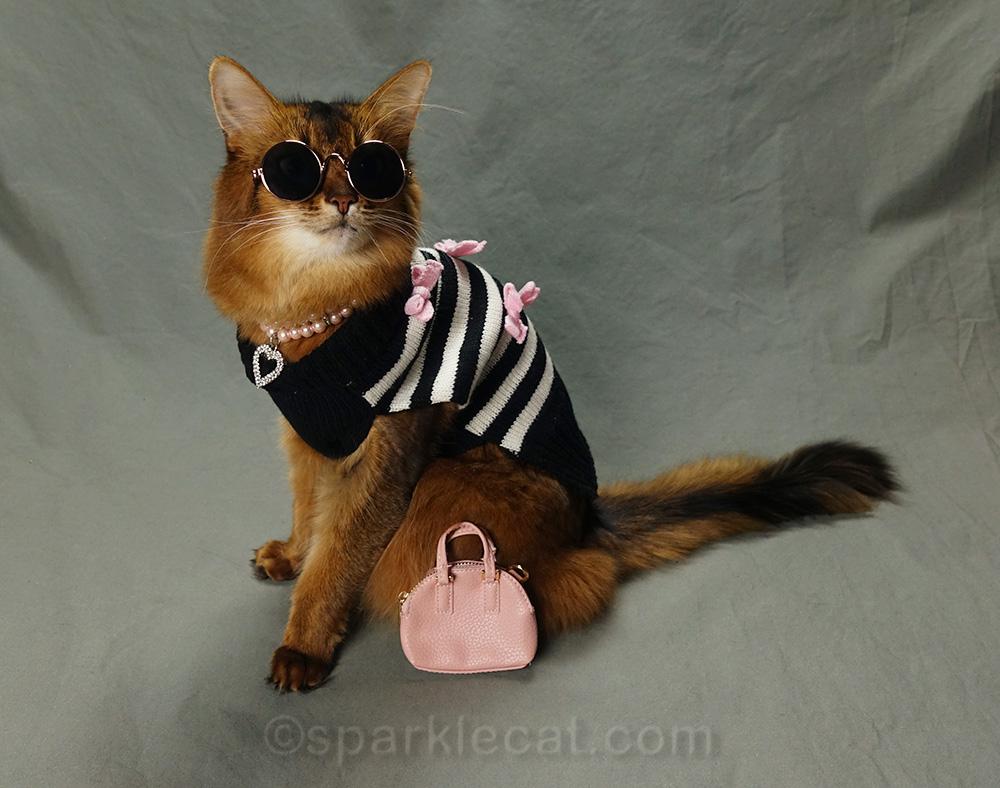 Somali cat posing as hipster cat