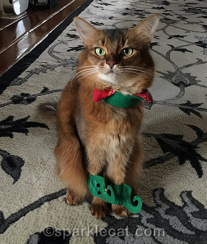 somali cat with part of an elf costume on
