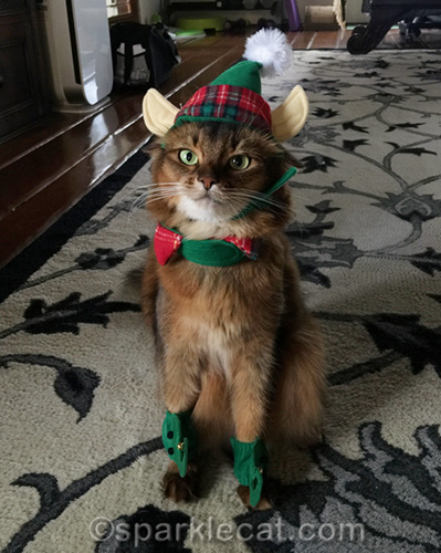 somali cat with elf costume on