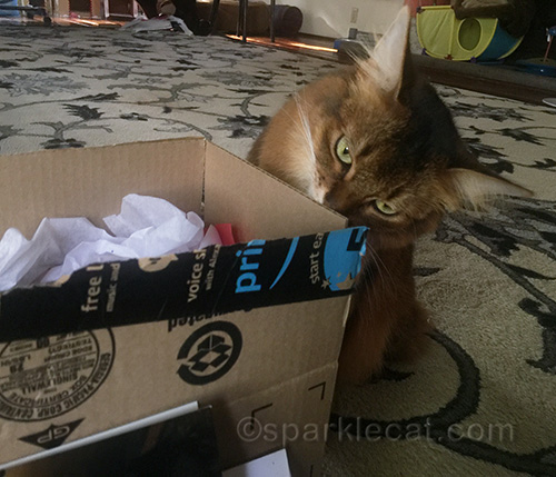 somali cat supervising packing Secret Paws gifts