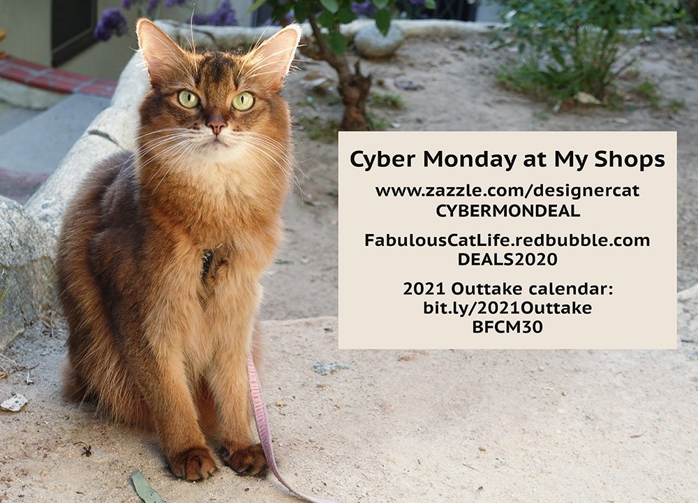Cyber Monday Deals at my shops