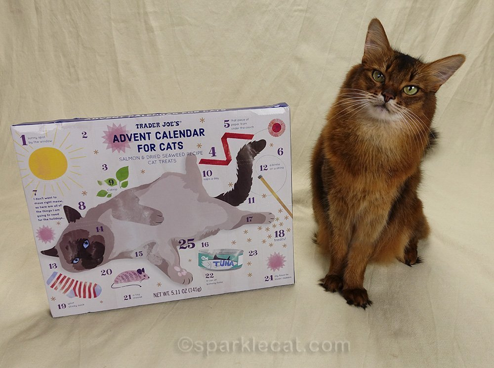 somali cat with her Trader Joe's cat advent calendar