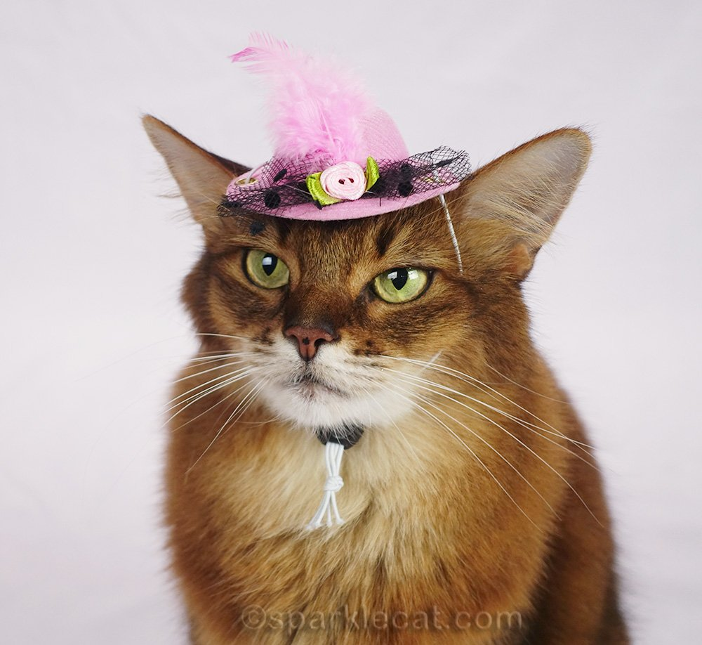 somali cat wearing cute little cat hat