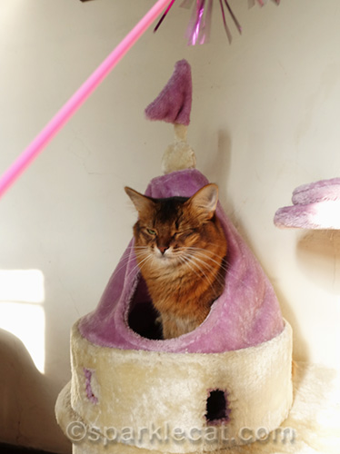 outtake of somali cat in castle cat tower