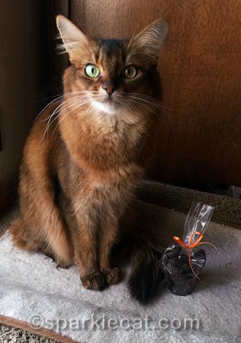 somali cat posing with tiny dark chocolate turkey
