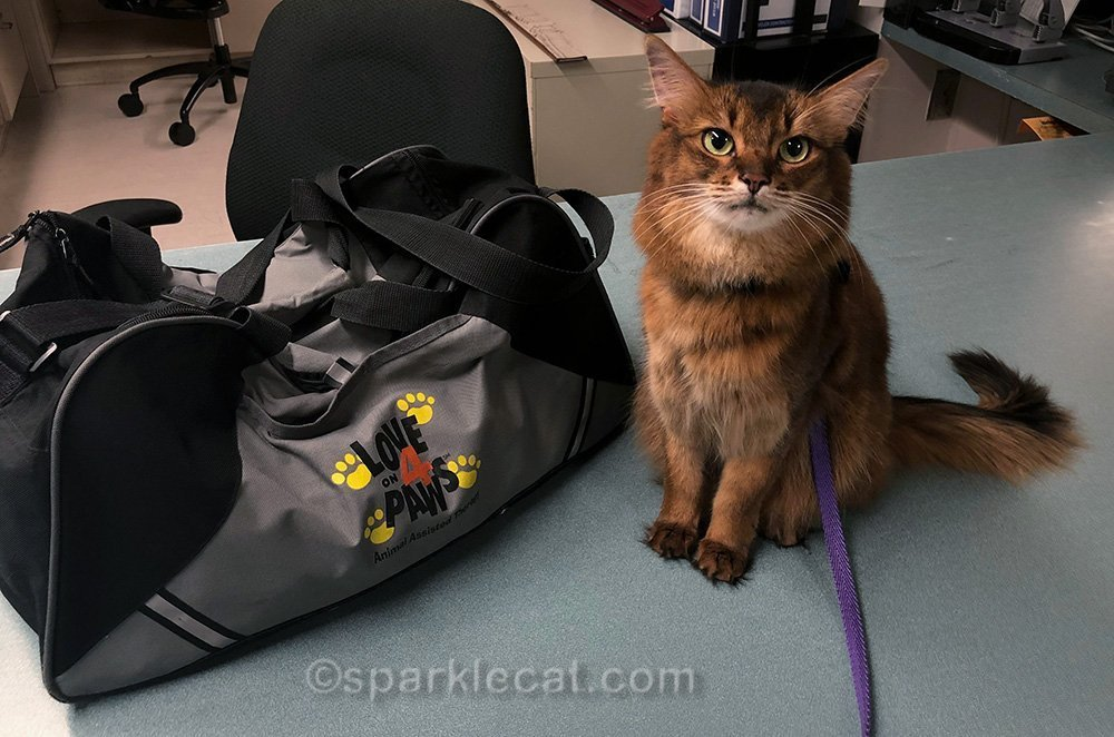 One wing at the hospital has so many patients, that Summer's therapy cat visit begins and ends there.