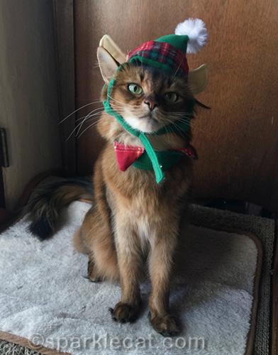 somali cat in elf hat, ready to take selfie