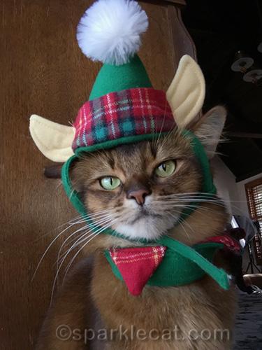 selfie of somali cat in elf hat