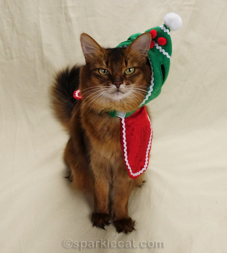 holiday hat totally slipping off somali cat's head