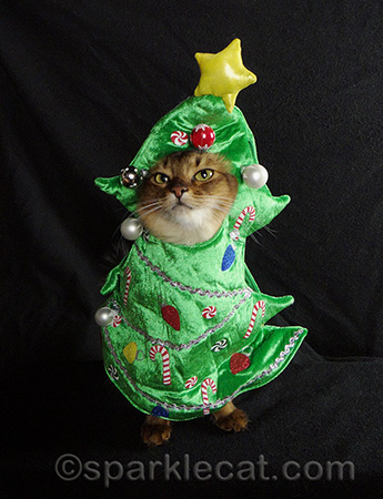 somali cat christmas tree cat costume