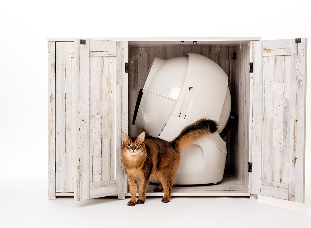 somali cat modeling with litter box furniture