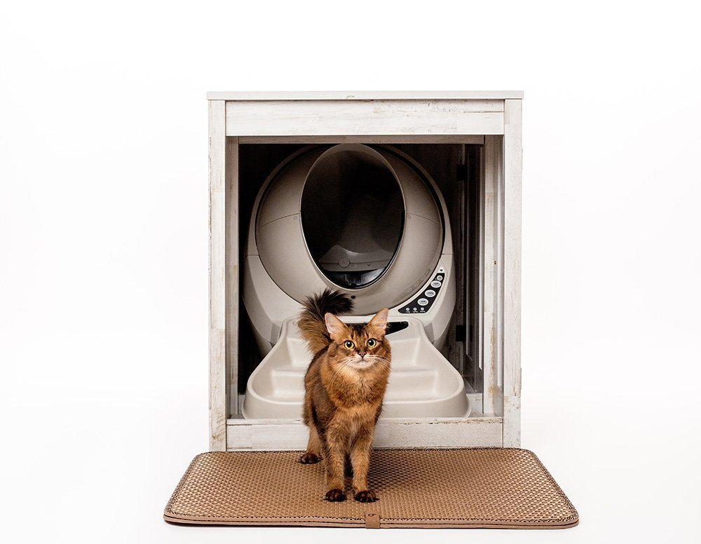 somali cat posing in front of litter robot inside litter box cabinet