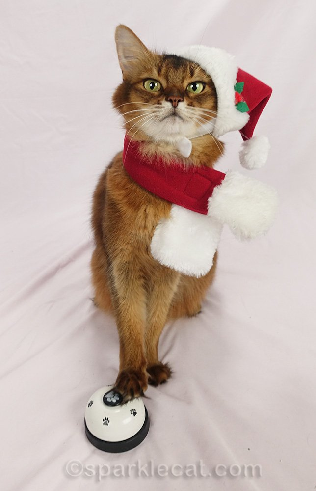 Somali cat in santa hat ringing a bell