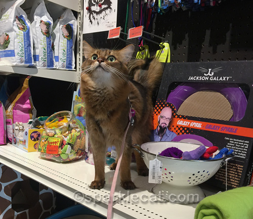 somali cat buying Christmas presents