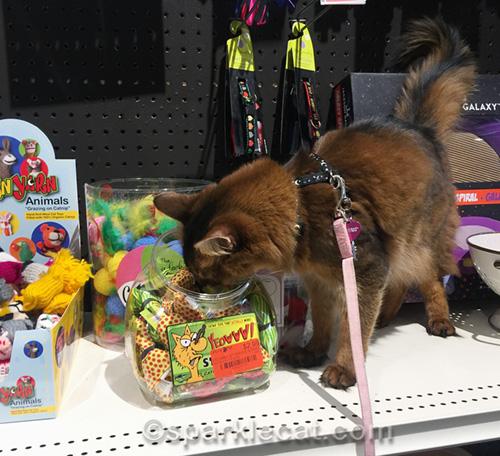 Can Pet Stores Carry Human Food