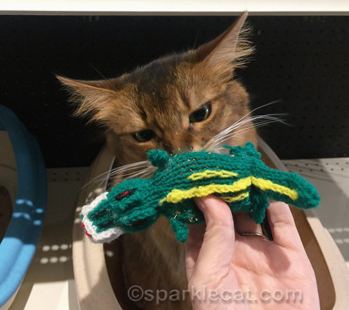 somali cat sniffing catnip crocodile cat toy