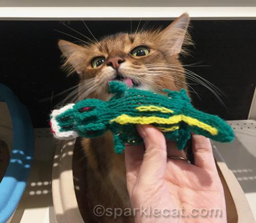 somali cat testing out catnip crocodile cat toy