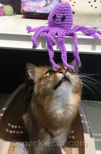 somali cat sniffing octopus cat toy