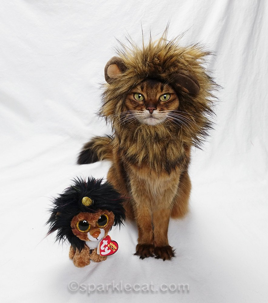 somali cat wearing lion mane with stuffie