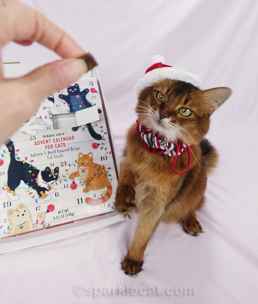 While posing with the Trader Joe's Cat Advent Calendar, Summer's tongue proved to be exceedingly uncooperative.