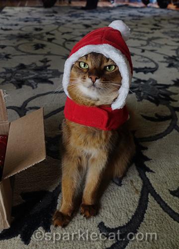 somali cat in santa costume
